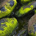 Rounded Rocks by Tim Grams