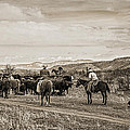 Rounding Up Cattle In Cornville Arizona Sepia by Priscilla Burgers