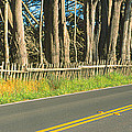 Route 1, Mendocino, California by Panoramic Images