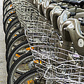Row Of Bicycles by Carlos Caetano