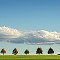 Row Of Trees by Thomas Winz