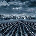 Rows N Rows by Keith Hawley