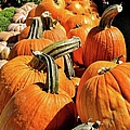 Rows Of Pumpkins Greeting Card by Jean Goodwin Brooks