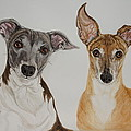 Roxie And Bruno The Greyhounds by Megan Cohen