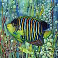 Royal Angelfish by Hailey E Herrera