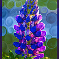 Royal Purple Lupine Flower Abstract Art by Omaste Witkowski
