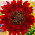 Royal Red Sunflower by Omaste Witkowski