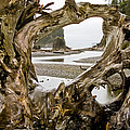 Ruby Beach Driftwood #3 by Greg Reed