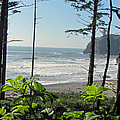 Ruby Beach I by Tikvah's Hope