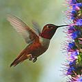 Ruby Throated Hummingbird Digital Art by Ernie Echols