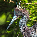 Ruffled Feathers by Christina Manassa