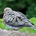 Ruffled Feathers by Cynthia Guinn