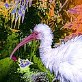 Ruffled Feathers by Doris Wood