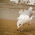 Ruffled Feathers by Lisa Richards
