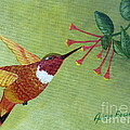 Rufous Hummingbird by Alicia Fowler