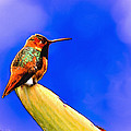Rufous Hummingbird Painting by Bob and Nadine Johnston