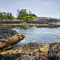 Rugged Coast Of Pacific Ocean On Vancouver Island by Elena Elisseeva