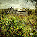 Run Down Barn by Joan McCool