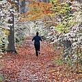 Run Through The Woods by Allen Beatty