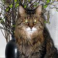 Runcius- Palm Sunday Kitty by Ausra Huntington nee Paulauskaite