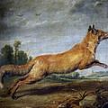 Running Fox by Paul de Vos