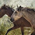Running Free - Pryor Mustangs by Belinda Greb