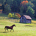 Running Horse And Old Barn by Duane McCullough