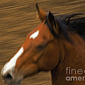 Running Horse by J L Woody Wooden