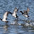 Running On Water by Lori Tordsen