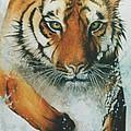 Running Tiger by Alan Pickersgill