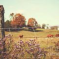 Rural Country Scene by Sandra Cunningham