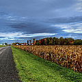 Rural Drama.. by Nina Stavlund
