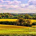 Rural England by Daniela White