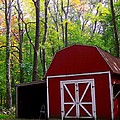 Rural Fall Scene by Sylvia Herrington