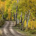 Rural Forest Service Road by Adam Jones