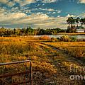 Rural Georgia  by Dave Bosse