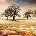 Rural Oaks by Jayne Gulbrand
