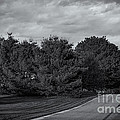 Rural Road 52 by Mark Myhaver