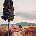 Rural Road With Cypress Tree In Tuscany Italy by Matteo Colombo
