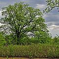 Rural Trees II by Debbie Portwood