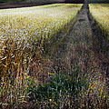 Ruralscape #1 by Alfredo Gonzalez