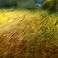 Ruralscape #8. Field And Wind by Alfredo Gonzalez