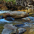 Rushing Mountain Stream by Robert Bales