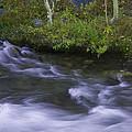 Rushing Stream And Creek Bank - Eastern Sierra by Ram Vasudev
