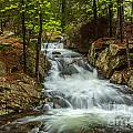 Rushing Stream In Acadia by Susan Cole Kelly