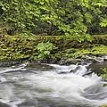 Rushing Water At Cedar Creek Washington State by Jit Lim