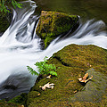 Rushing Water At Whatcom Falls Park by Priya Ghose