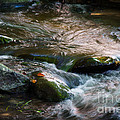 Rushing Waters by Cindy Tiefenbrunn