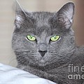 Russian Blue by Michelle Powell