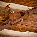 Rust Trapped On A Log - Old Trap - Casper Wyoming by Diane Mintle